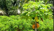 herbs euphrates